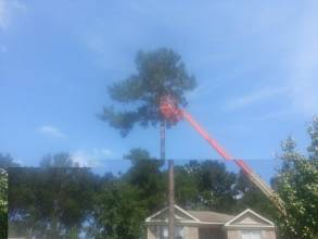 Tree Removal Savannah Georgia