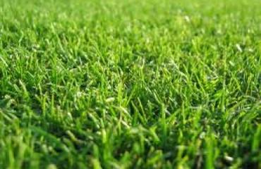Green lawn grass Savannah Georgia