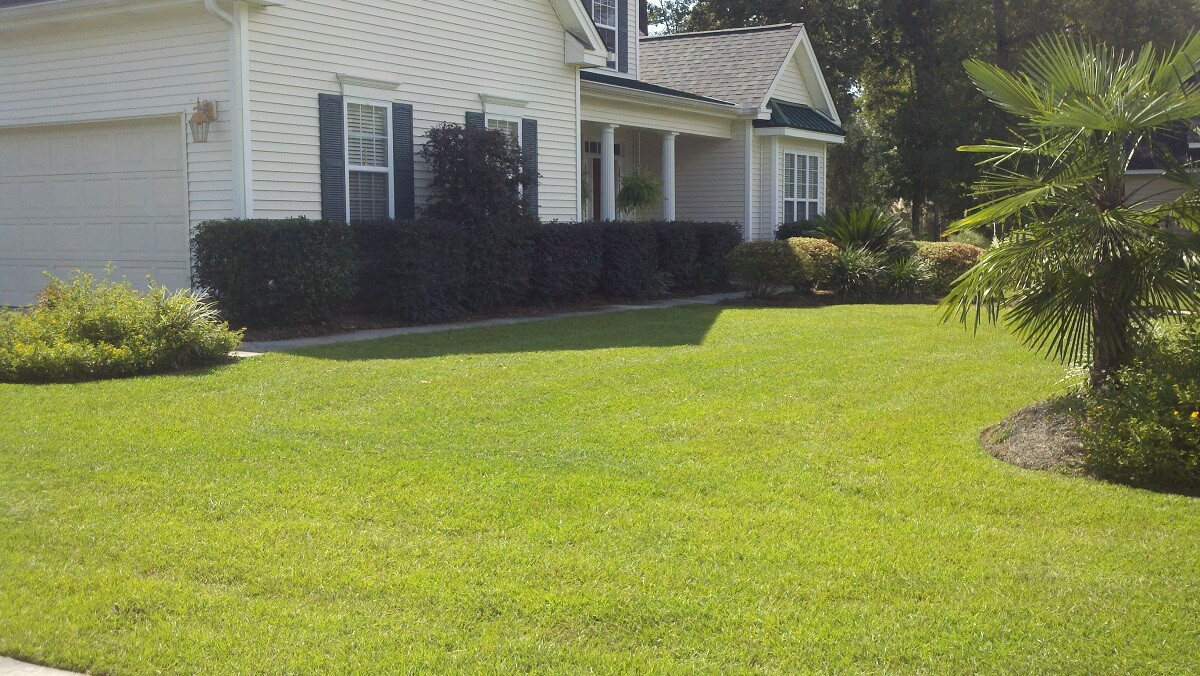 Hedge Trimming - Savannah - Pooler - Richmond Hill Georgia ...