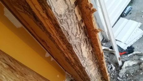 Termite Damage in wood