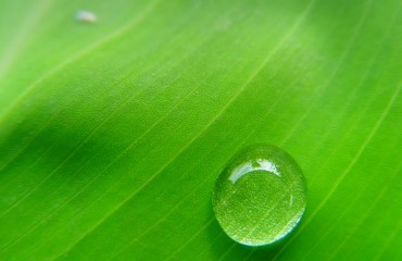 cpm-green-leaf-with-water-drop-dripping