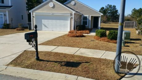 Long Needle Pine Straw Sales Savannah