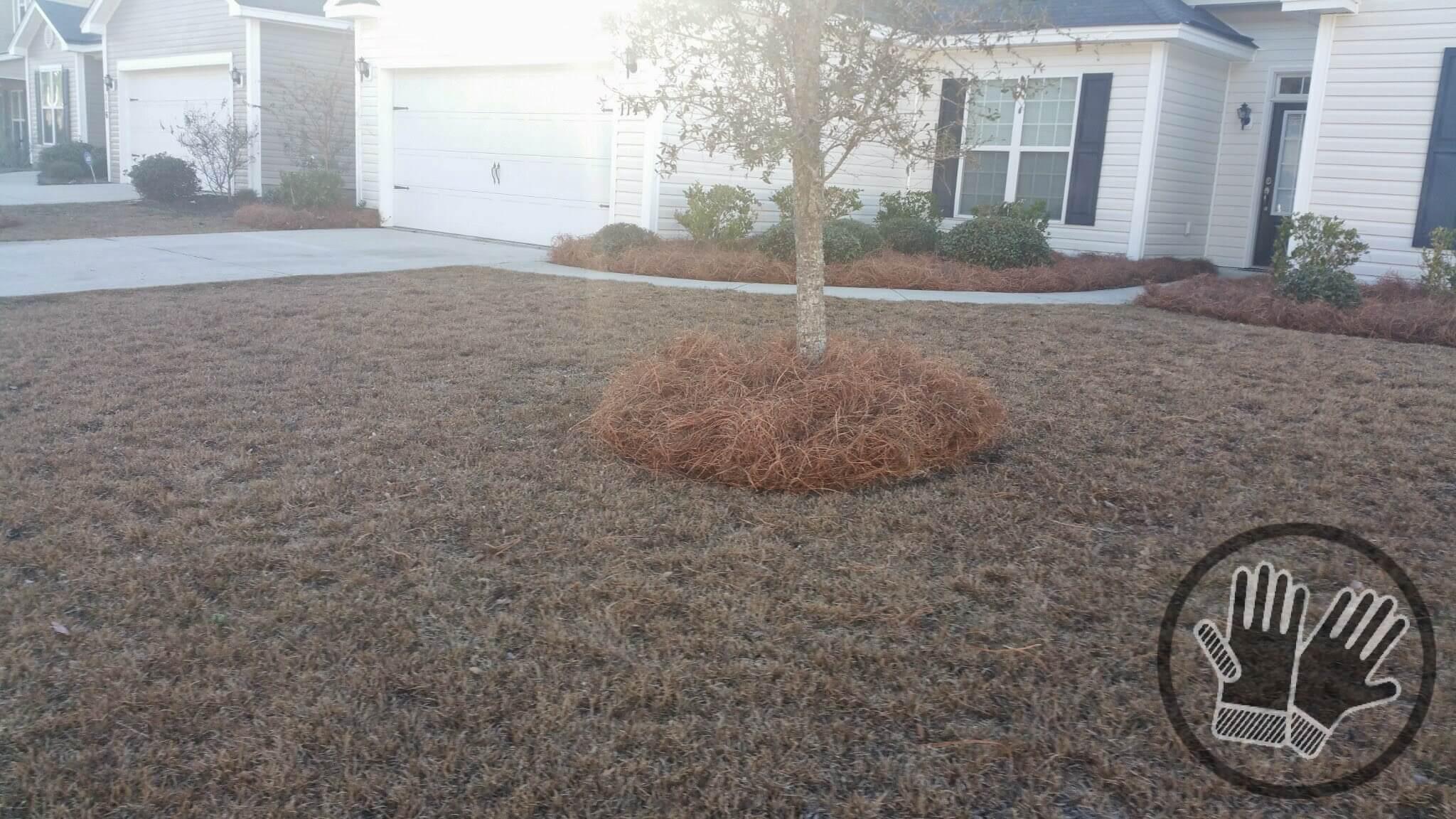 Landscaping Long Needle Pine Straw Installation Handyman