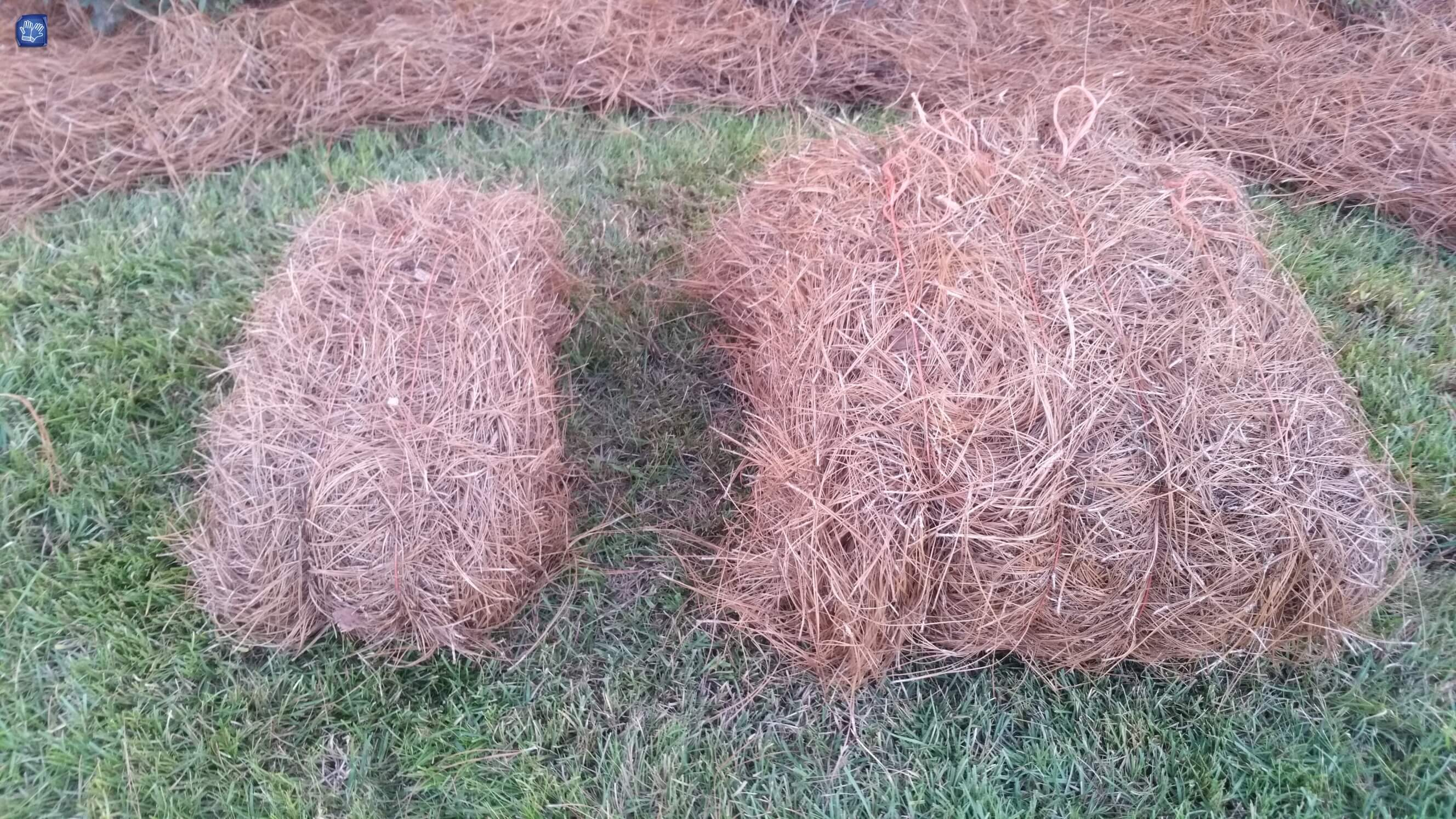 Regular Bale Of Pine Straw