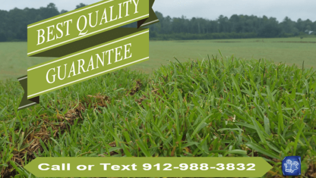 sod installation savannah ga
